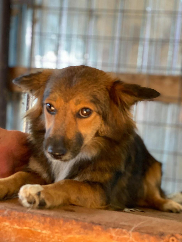 Lili (ex-Stella) - femelle - fourrière de Târgu Frumos - réservée adoptions (68) Stella12