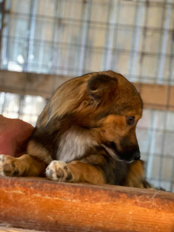 Lili (ex-Stella) - femelle - fourrière de Târgu Frumos - réservée adoptions (68) Stella14