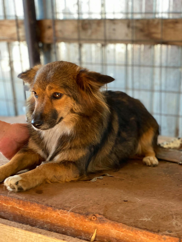 Lili (ex-Stella) - femelle - fourrière de Târgu Frumos - réservée adoptions (68) Stella16