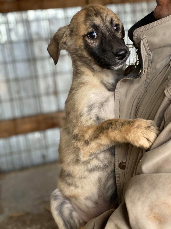 Stitch-mâle- fourrière de Târgu Frumos - Adopté via Andreea Stitch10