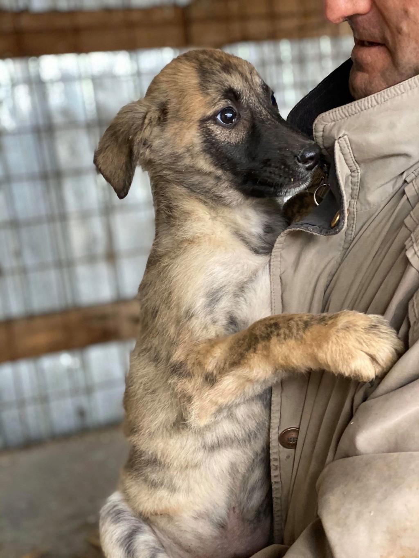 Stitch-mâle- fourrière de Târgu Frumos - Adopté via Andreea Stitch12