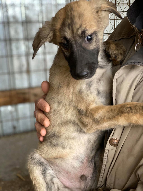 Stitch-mâle- fourrière de Târgu Frumos - Adopté via Andreea Stitch13
