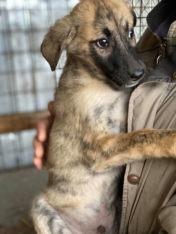 Stitch-mâle- fourrière de Târgu Frumos - Adopté via Andreea Stitch14