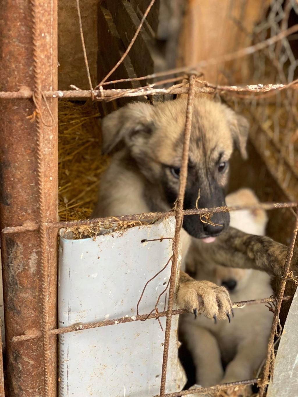 Stitch-mâle- fourrière de Târgu Frumos - Adopté via Andreea Stitch15