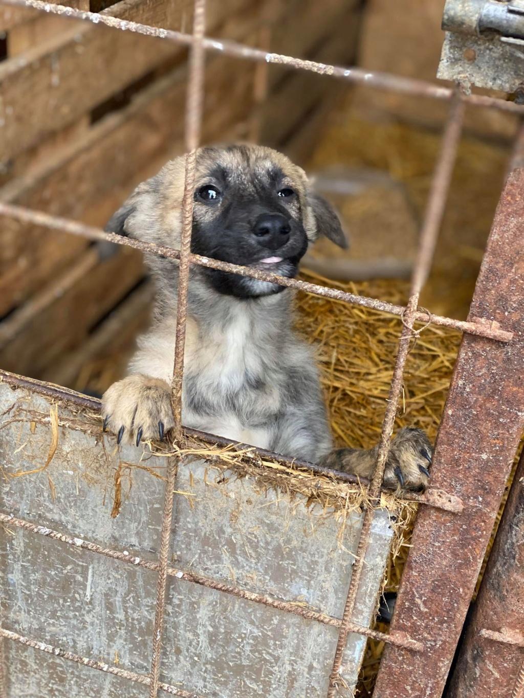 Stitch-mâle- fourrière de Târgu Frumos - Adopté via Andreea Stitch18