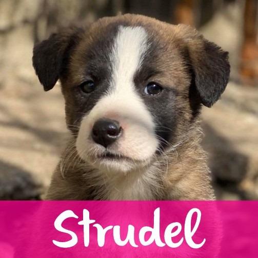 StrudelF