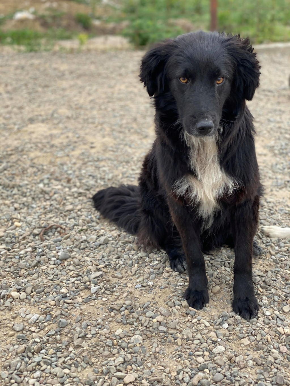 Merlin (ex-Sultant) - mâle- fourrière de Târgu Frumos - adoption (25)  Sultan10