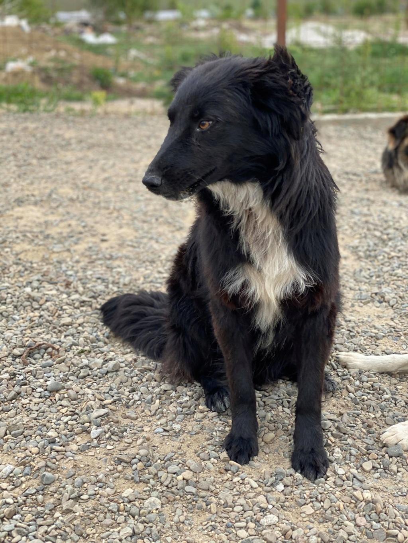 Merlin (ex-Sultant) - mâle- fourrière de Târgu Frumos - adoption (25)  Sultan11