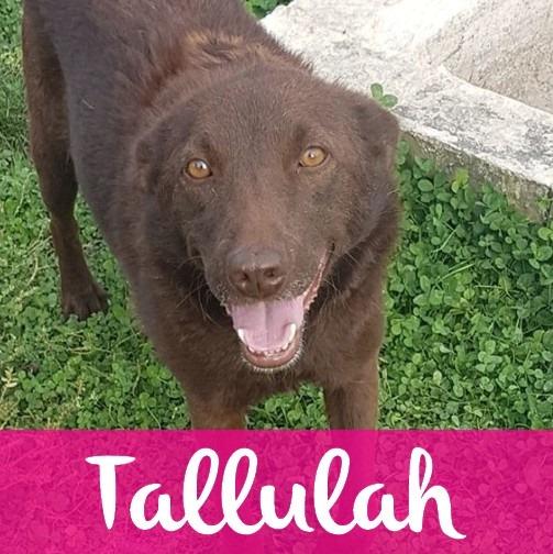 TallulahF
