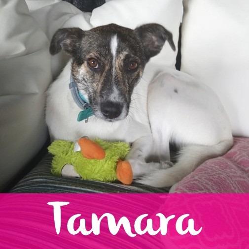TamaraF