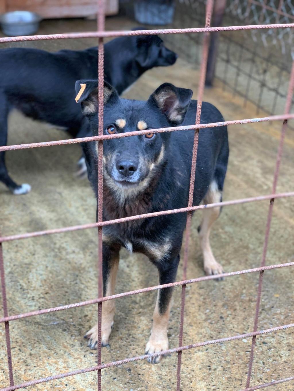 Texas - mâle - fourrière de Târgu Frumos - adopté en Roumanie Texxas10