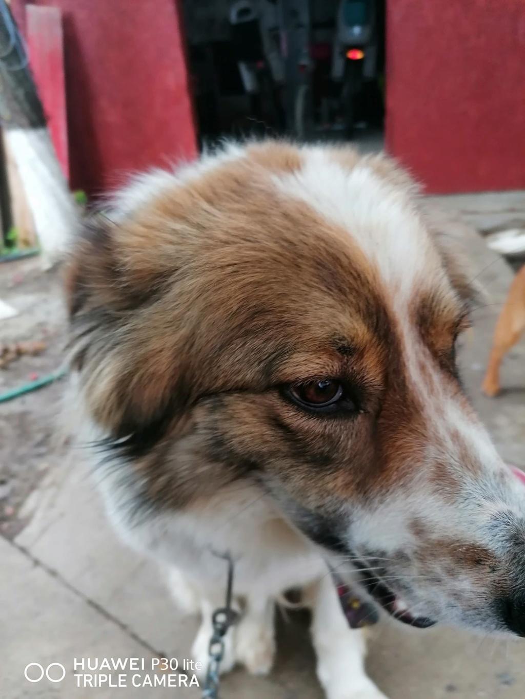Thasa- femelle- fourrière de Târgu Frumos - Frais d'adoption réduits Thasa_12