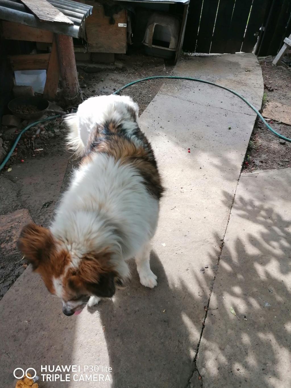 Thasa- femelle- fourrière de Târgu Frumos - Frais d'adoption réduits Thasa_13