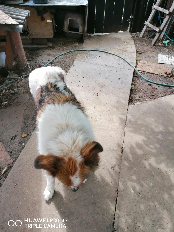 Thasa- femelle- fourrière de Târgu Frumos - Frais d'adoption réduits Thasa_15