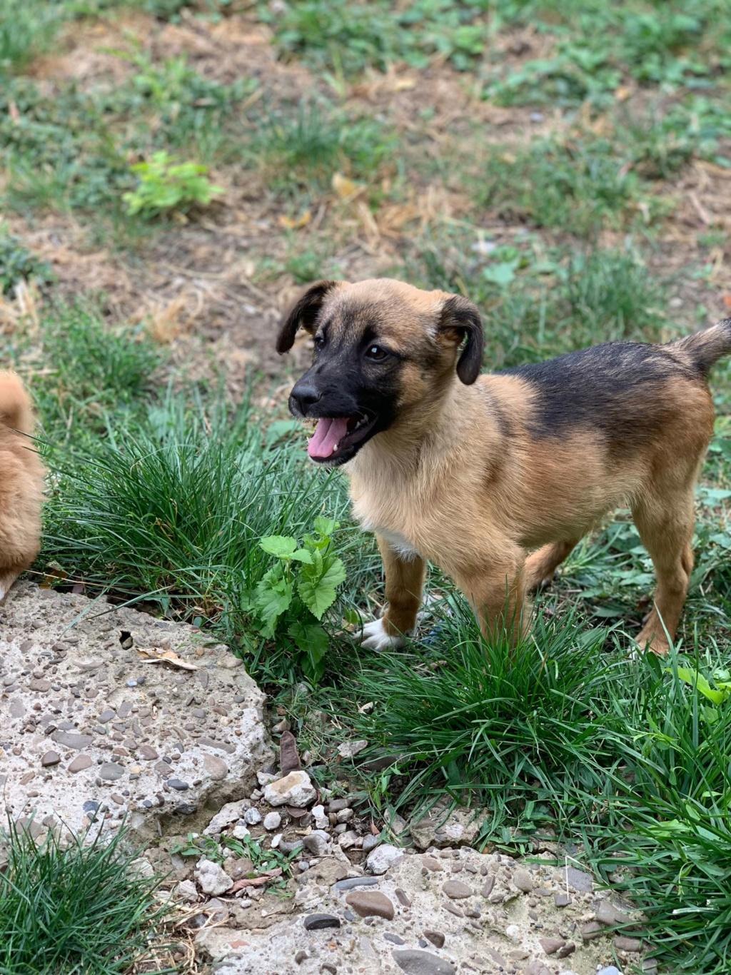 Thessy- femelle- chez la bénévole à Târgu Frumos - réservée adoption (67)  Thessy14