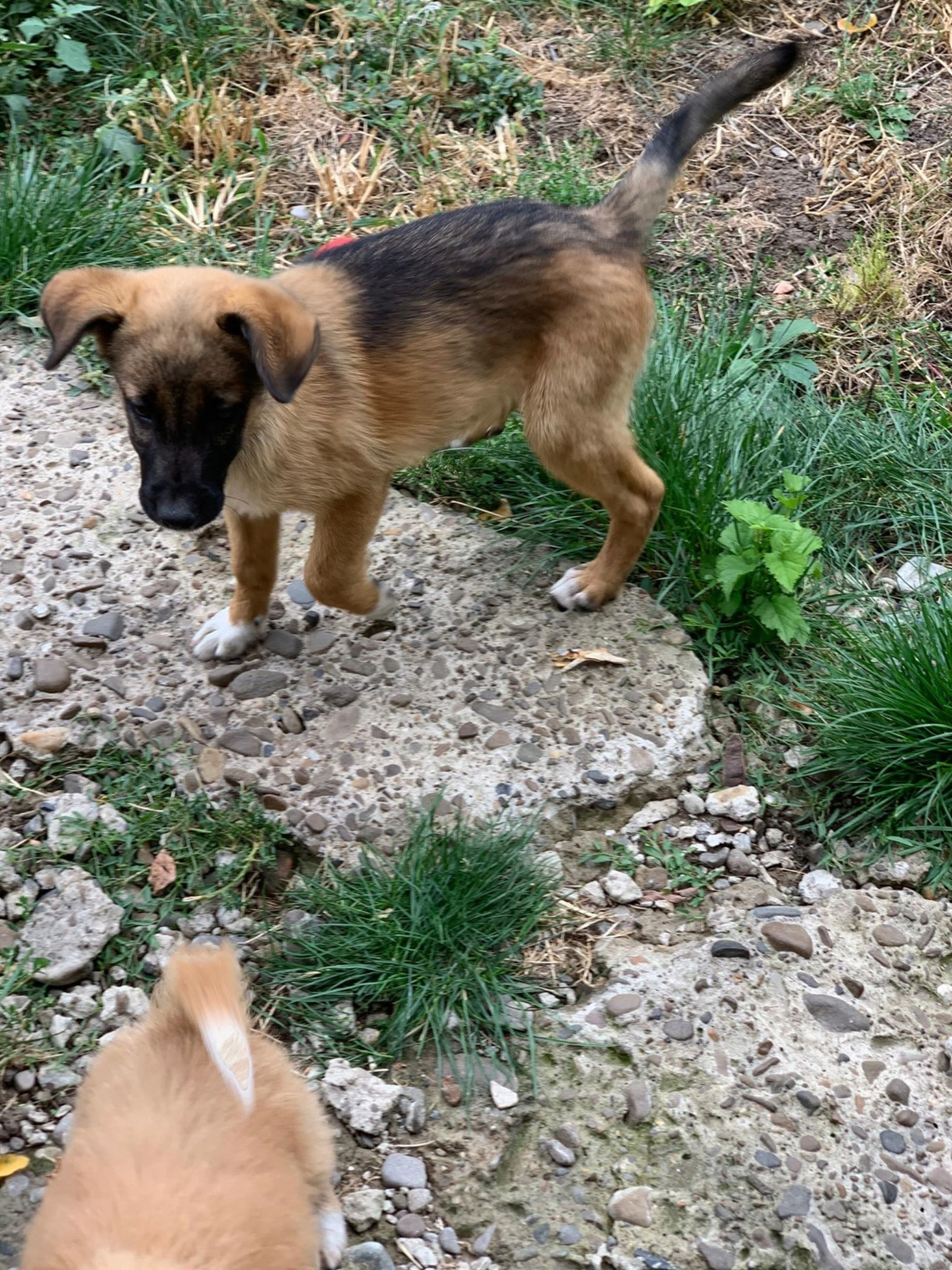 Thessy- femelle- chez la bénévole à Târgu Frumos - réservée adoption (67)  Thessy23