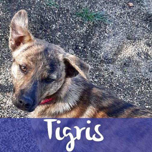 TigrisM
