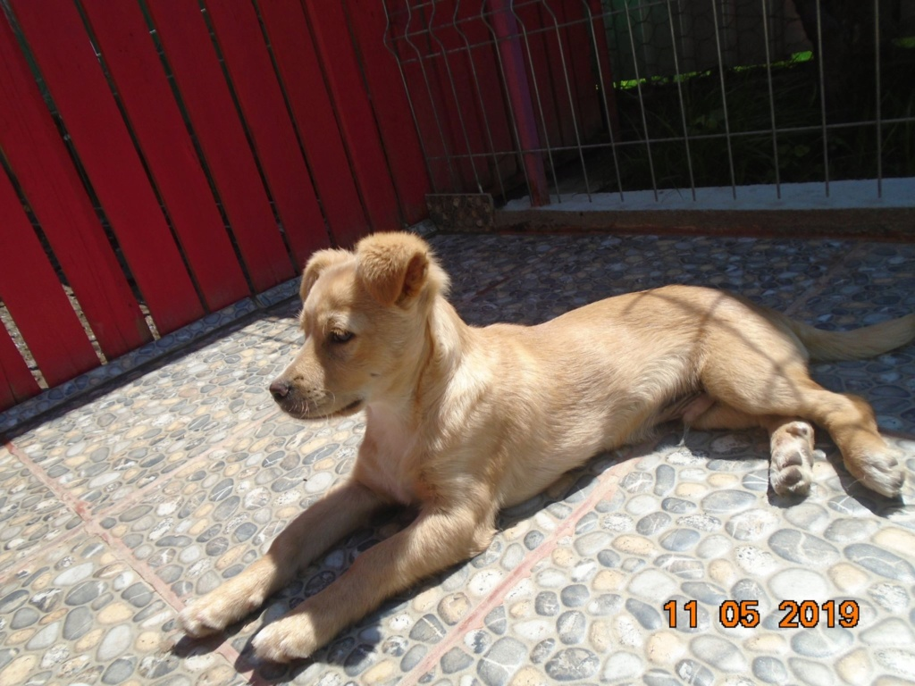 Titus- mâle- refuge d'Arad - réservé adoption 92 Titus_13