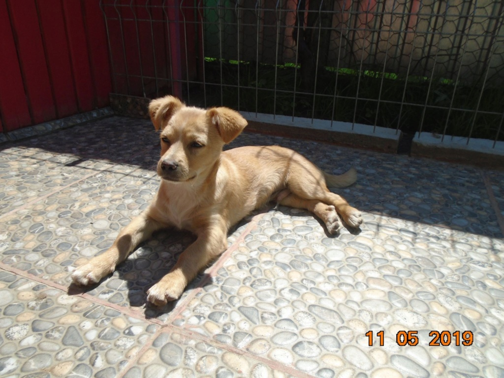 Titus- mâle- refuge d'Arad - réservé adoption 92 Titus_14