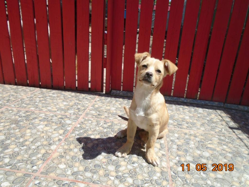 Titus- mâle- refuge d'Arad - réservé adoption 92 Titus_17