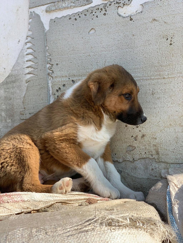 Toby- mâle-refuge de Targu Frûmos - réservé adoption 67 Toby_212