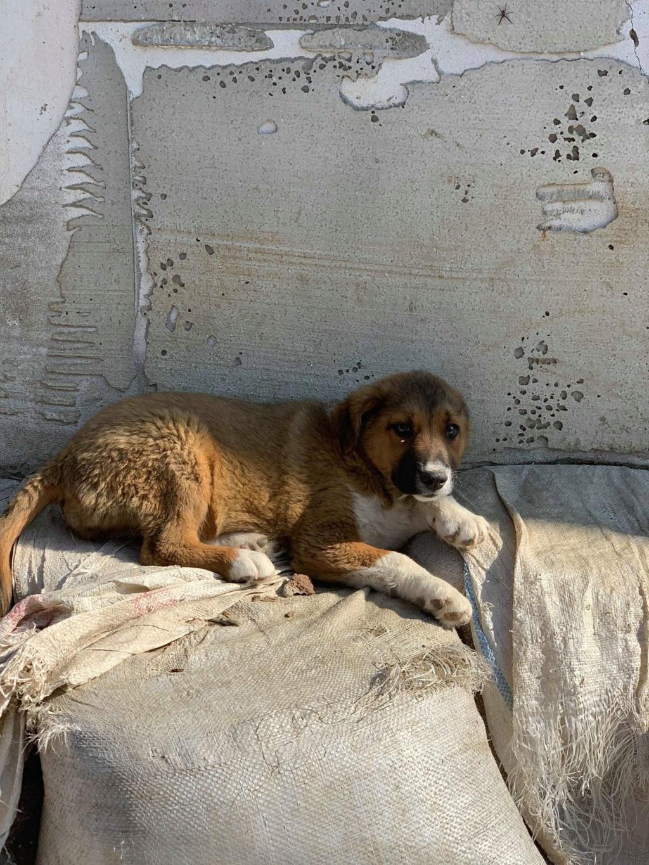 Toby- mâle-refuge de Targu Frûmos - réservé adoption 67 Toby_312