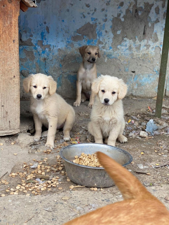 Toffee- femelle-fourrière de Târgu Frumos - multiples demandes en cours Toffee18
