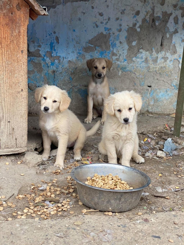 Toffee- femelle-fourrière de Târgu Frumos - multiples demandes en cours Toffee19