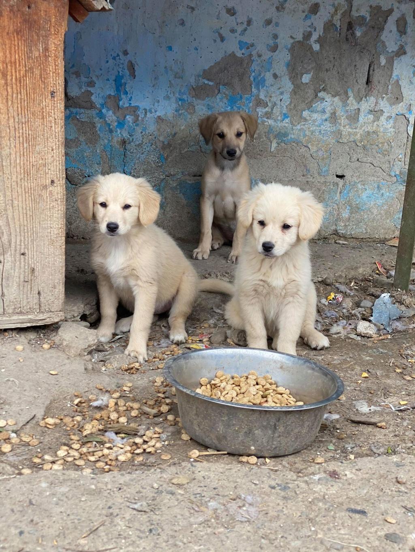 Toffee- femelle-fourrière de Târgu Frumos - multiples demandes en cours Toffee23