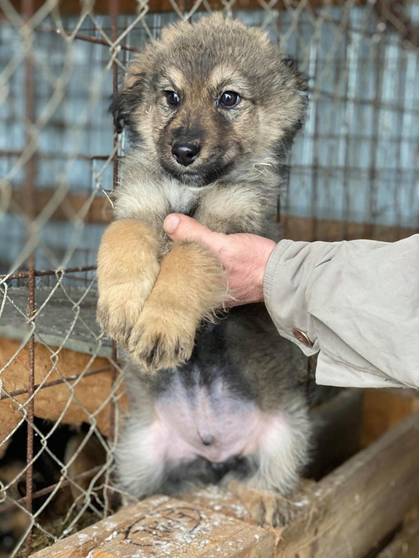 Ryuk (ex Trooper) -mâle- fourrière de Târgu Frumos Réservé adoption (59) Troope10
