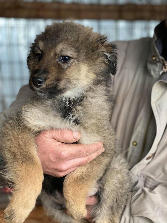 Ryuk (ex Trooper) -mâle- fourrière de Târgu Frumos Réservé adoption (59) Troope12