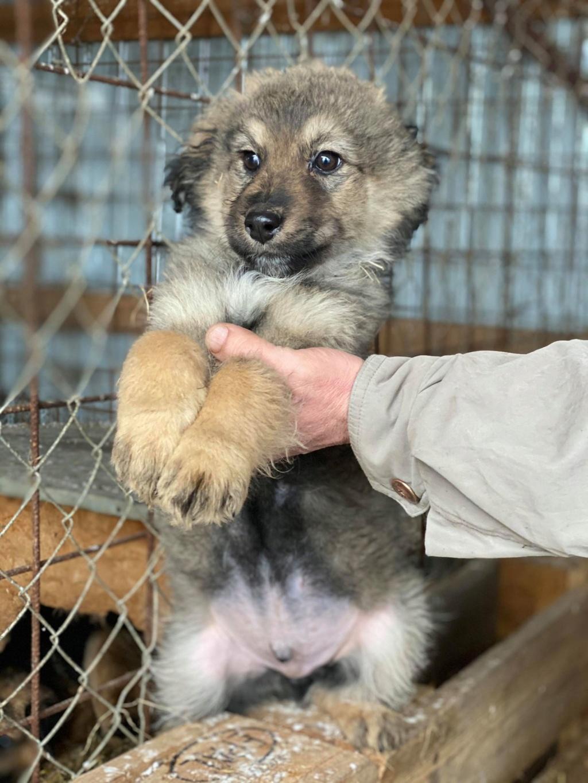 Ryuk (ex Trooper) -mâle- fourrière de Târgu Frumos Réservé adoption (59) Troope14
