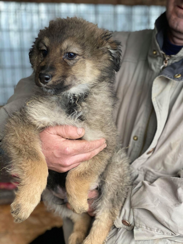 Ryuk (ex Trooper) -mâle- fourrière de Târgu Frumos Réservé adoption (59) Troope16