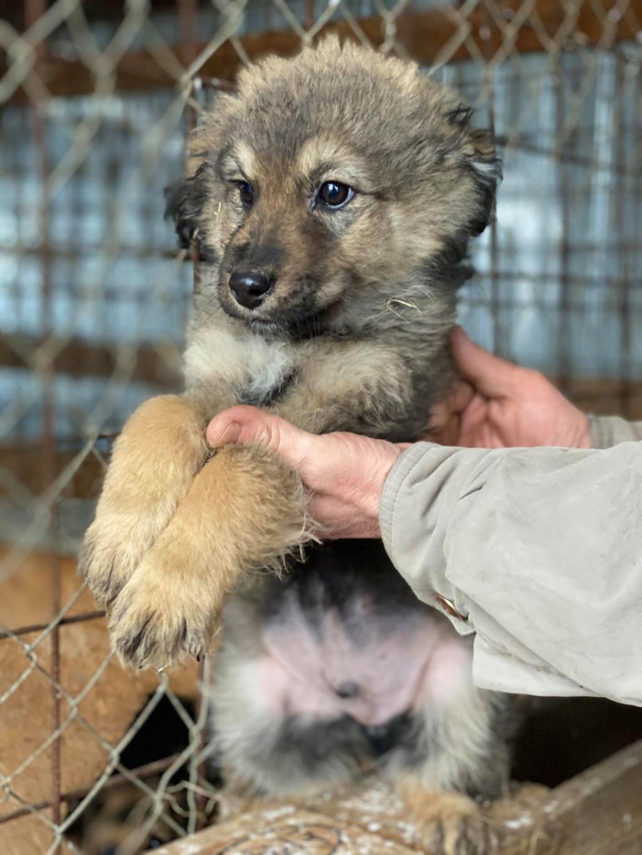 Ryuk (ex Trooper) -mâle- fourrière de Târgu Frumos Réservé adoption (59) Troope17