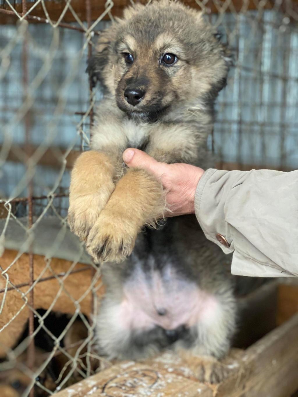 Ryuk (ex Trooper) -mâle- fourrière de Târgu Frumos Réservé adoption (59) Troope18