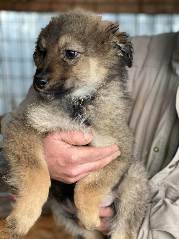 Ryuk (ex Trooper) -mâle- fourrière de Târgu Frumos Réservé adoption (59) Troope20