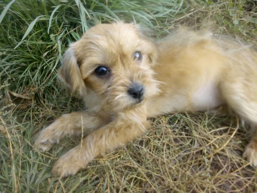 Tweenie- femelle- refuge de Târgu Frumos - adoptée via Andreea Tweeni10