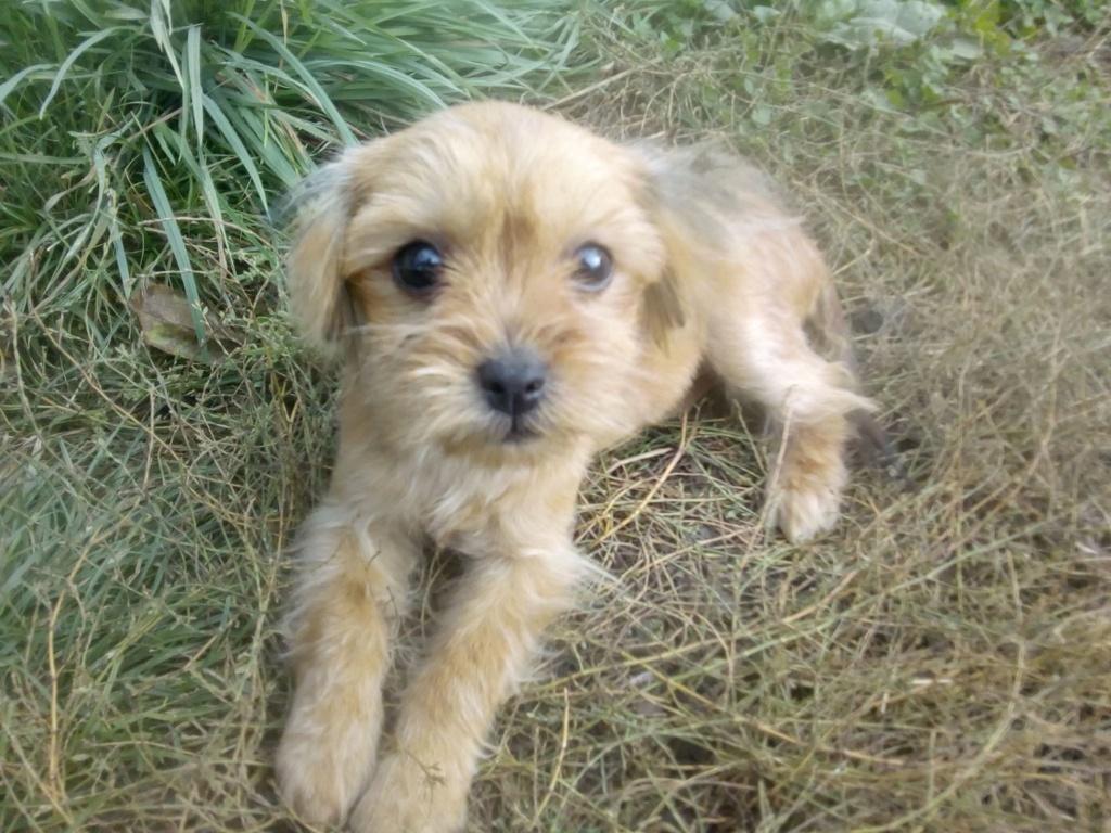 Tweenie- femelle- refuge de Târgu Frumos - adoptée via Andreea Tweeni13