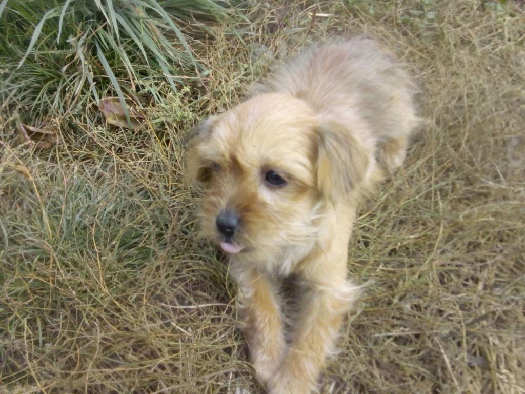 Tweenie- femelle- refuge de Târgu Frumos - adoptée via Andreea Tweeni18