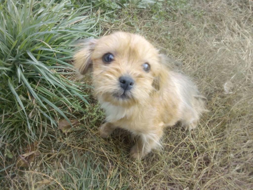 Tweenie- femelle- refuge de Târgu Frumos - adoptée via Andreea Tweeni22