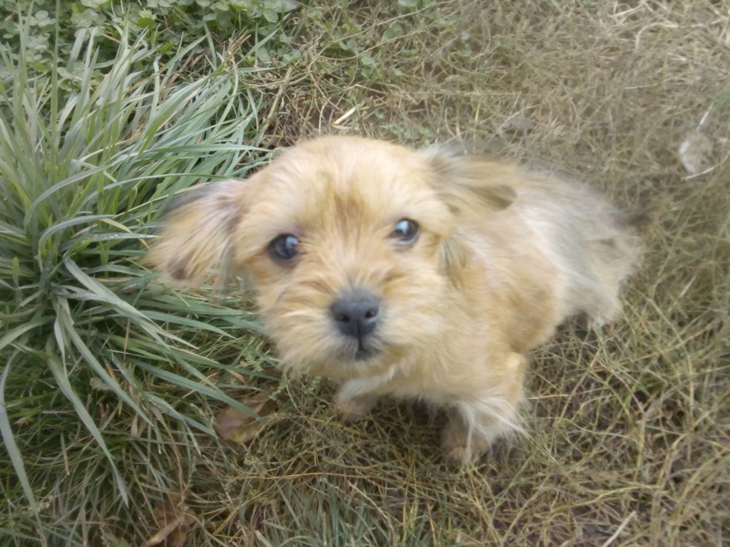 Tweenie- femelle- refuge de Târgu Frumos - adoptée via Andreea Tweeni23