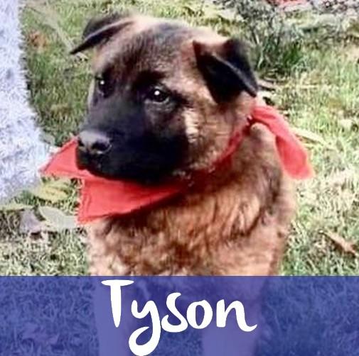 TysonM