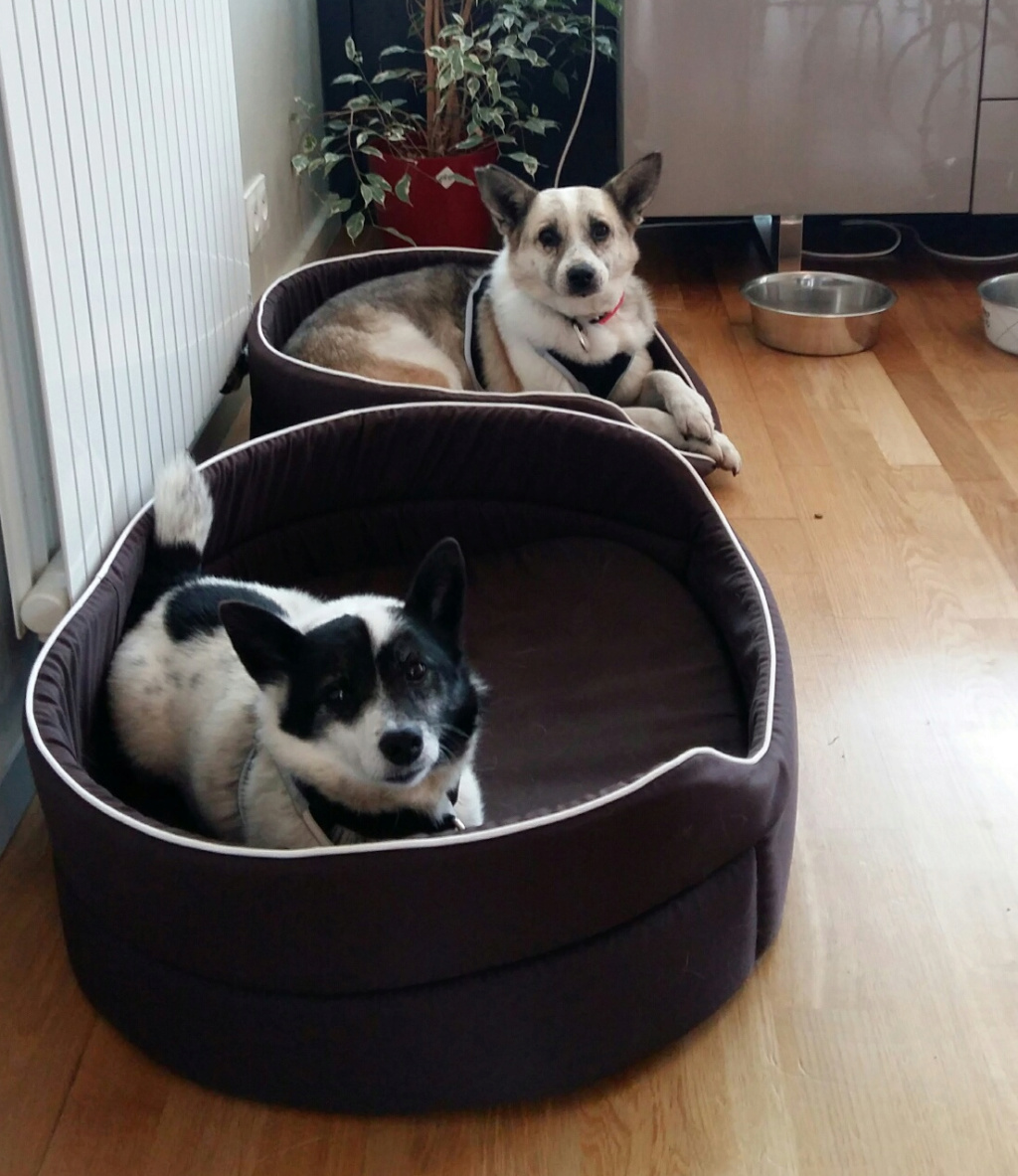 Fetita et Piciu - Arad - à adopter ensemble - réservés adoption ensemble (68) Unknow10