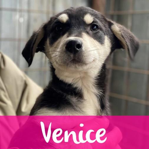 VeniceF