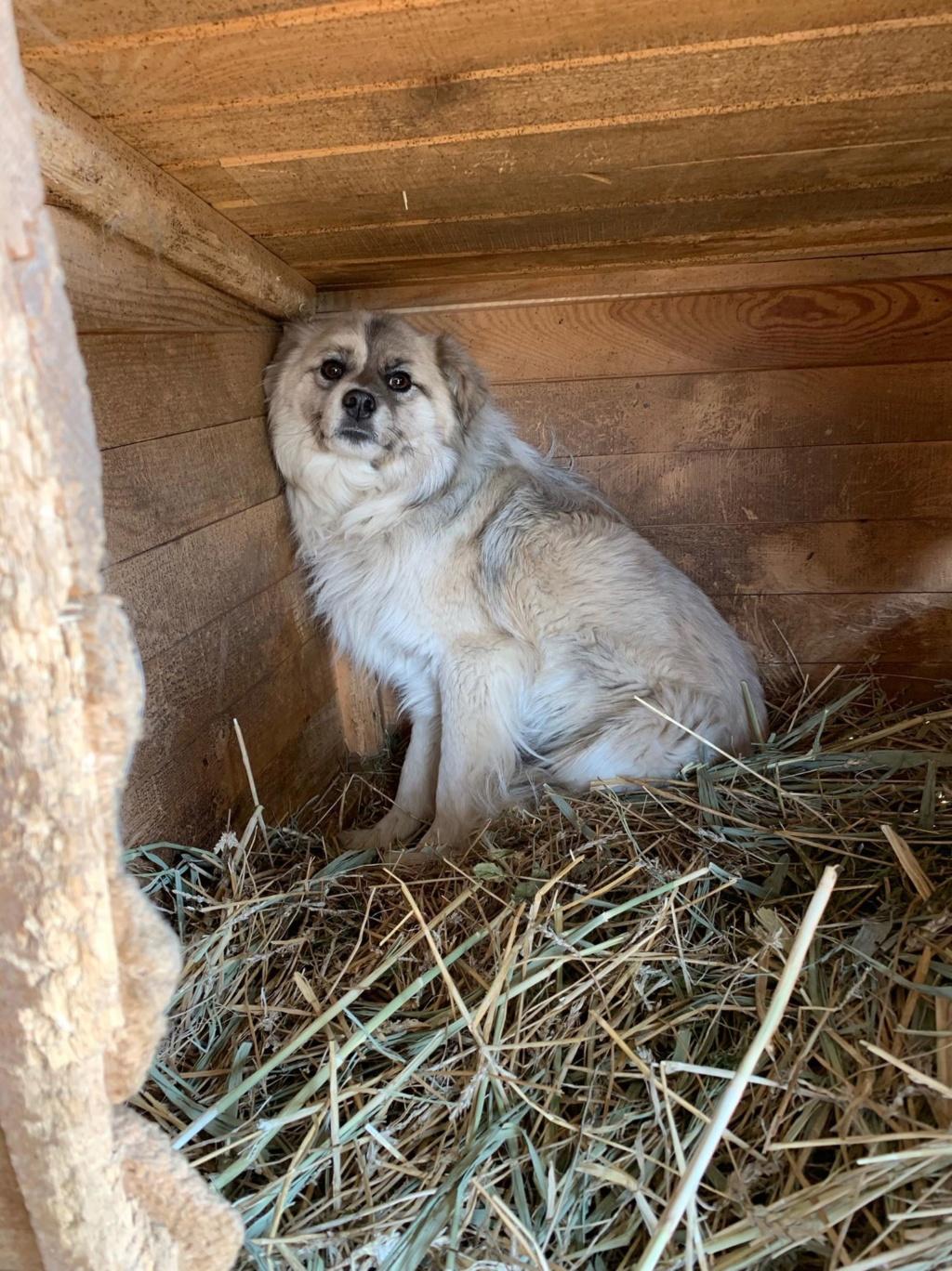 Vulpe - mâle - fourrière de Târgu Frumos Vulpe210
