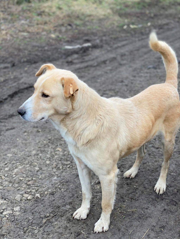 Winston-mâle- fourrière de Târgu Frumos - en fugue en Roumanie Winsto10