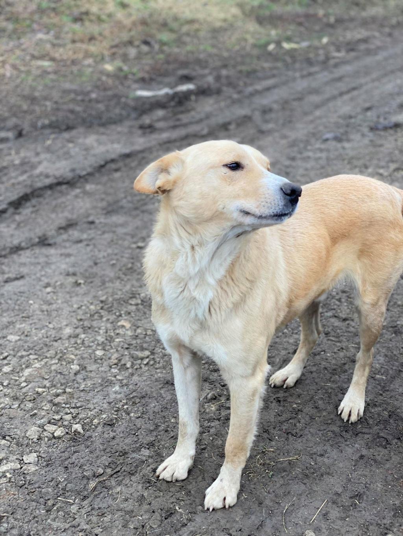 Winston-mâle- fourrière de Târgu Frumos Winsto11