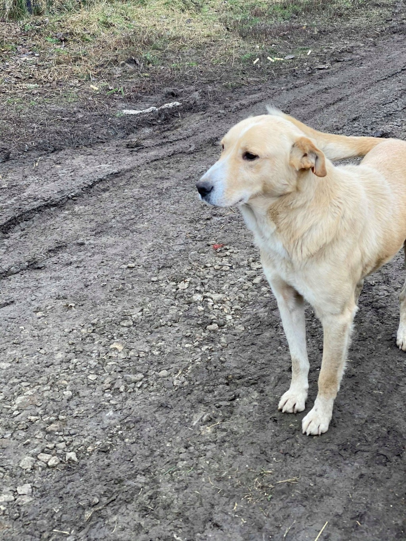 Winston-mâle- fourrière de Târgu Frumos - en fugue en Roumanie Winsto14