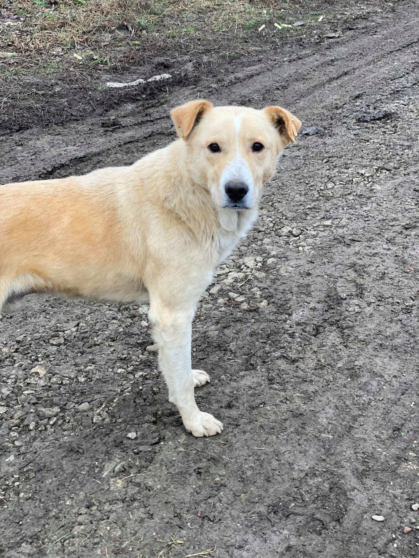 Winston-mâle- fourrière de Târgu Frumos - en fugue en Roumanie Winsto16