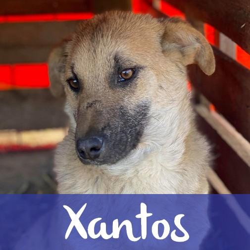 XantosM
